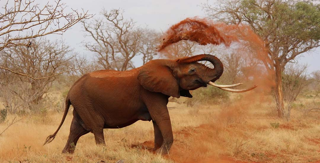 Un Elefante enfadado, ataca un coche lleno de turistas. 1