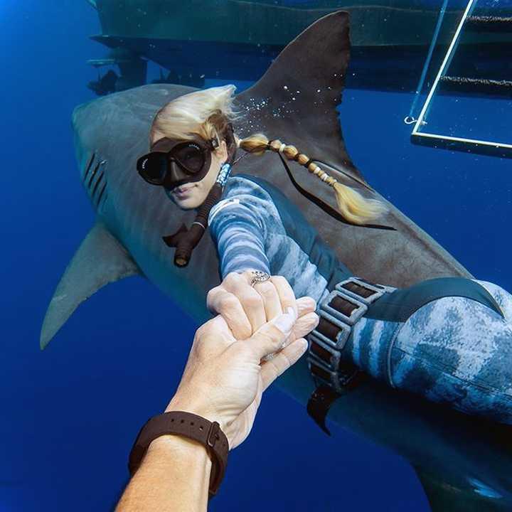 Nadando junto al Tiburón Blanco mas grande del mundo. 2