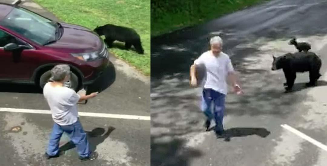 Un hombre molesta a una Osa que va con sus crías y esto es lo que pasa…