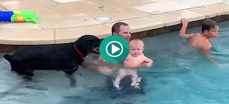 Este Rottweiler no quiere que el bebé este dentro del agua. 4