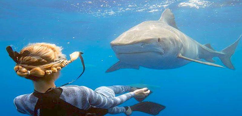Nadando junto al Tiburón Blanco mas grande del mundo. 1