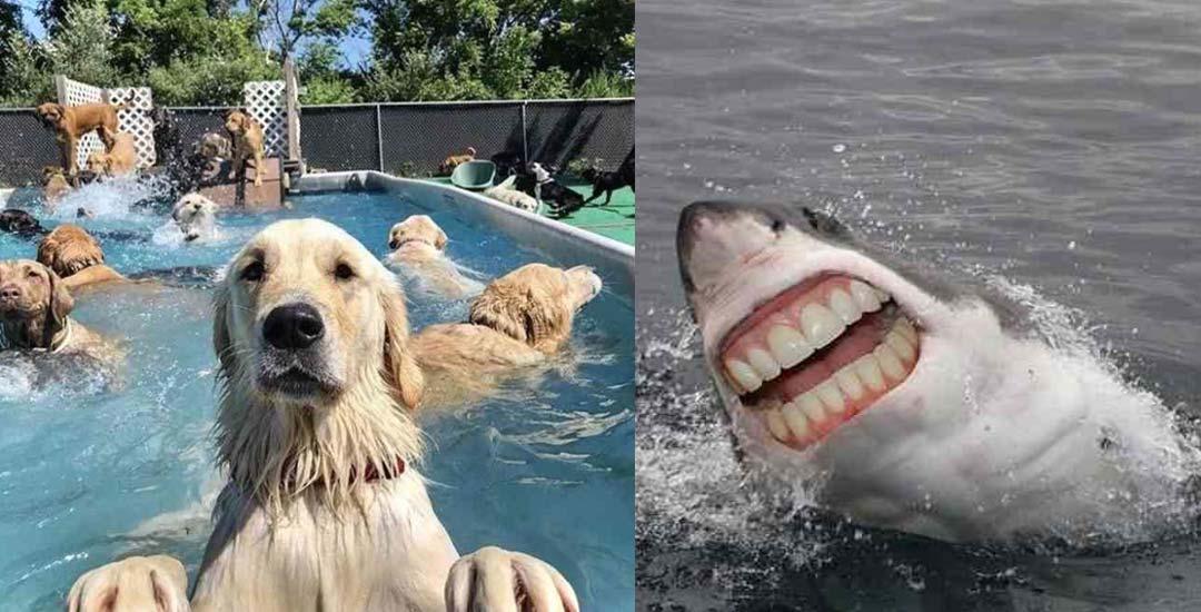 21 electrificantes imágenes que dan risa. 1
