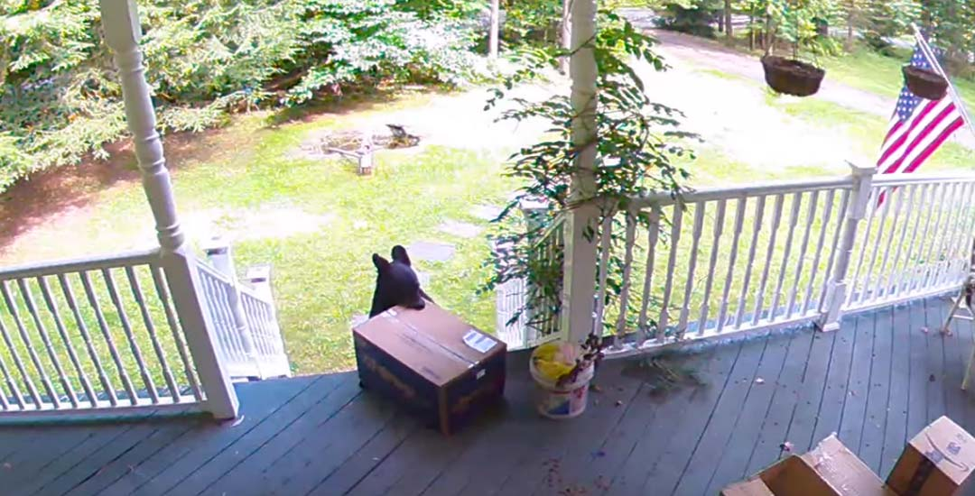 Vídeo de un oso robando un paquete de la puerta de una casa. 1