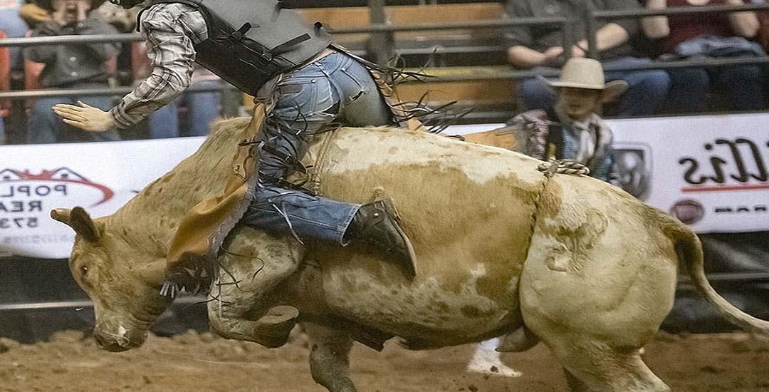 Monta un toro para un rodeo pero no sale como pensaba. 3