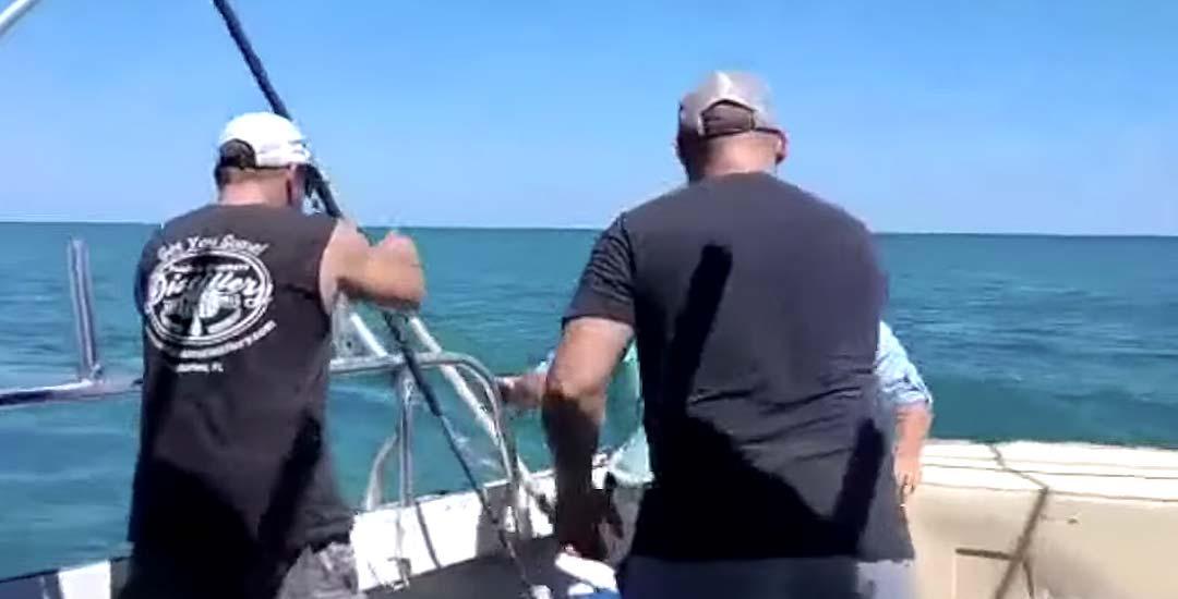 Un tiburón de punta negra, muerde al pescador que lo había capturado.