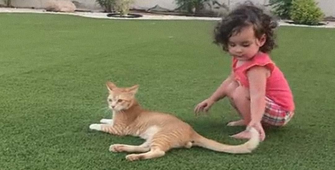 El vídeo del «no no no no no» el gato y la niña