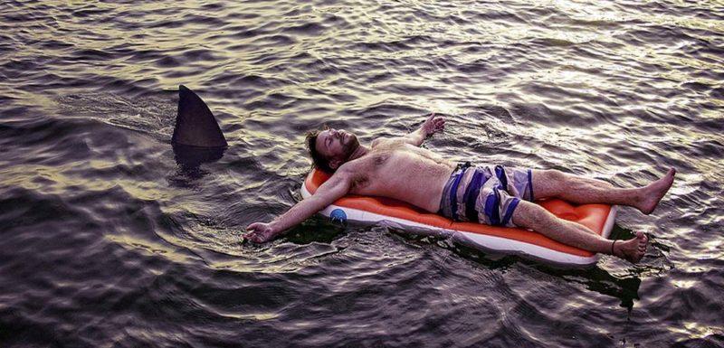 Tiburón casi ataca a dos personas en la playa. 1