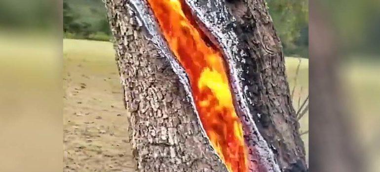 Impresionante vídeo de un árbol alcanzado por un rayo 2