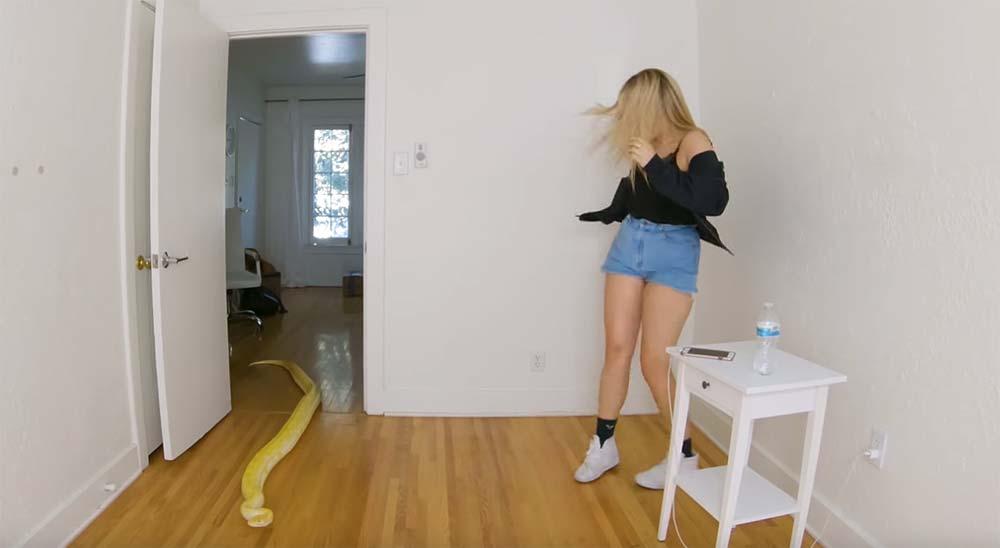 Chica haciendo un directo, es sorprendida por una serpiente pitón