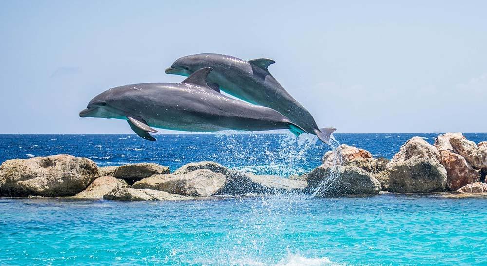 A estos delfines les molesta el surfista 3