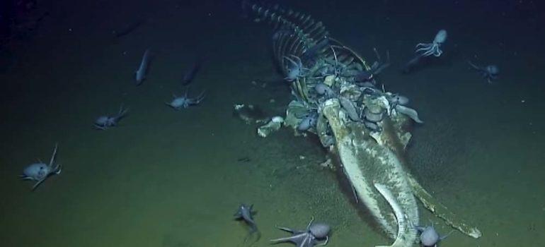 Esqueleto de ballena encontrado en el fondo del mar 3