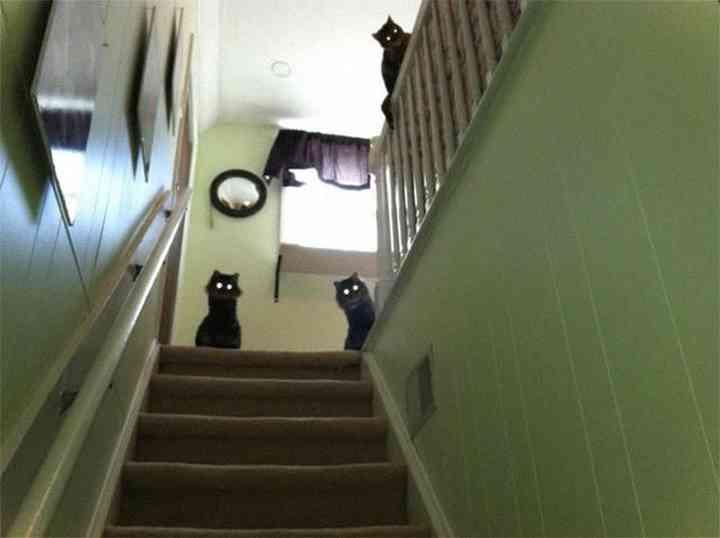 15 Fotos de animales que te van a dar miedo 5