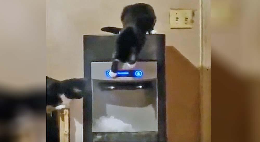 Estos gatos han descubierto como funciona la maquina de hielo 9