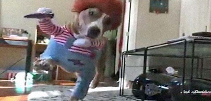 Disfraz de Chucky para perro [vídeo] 1