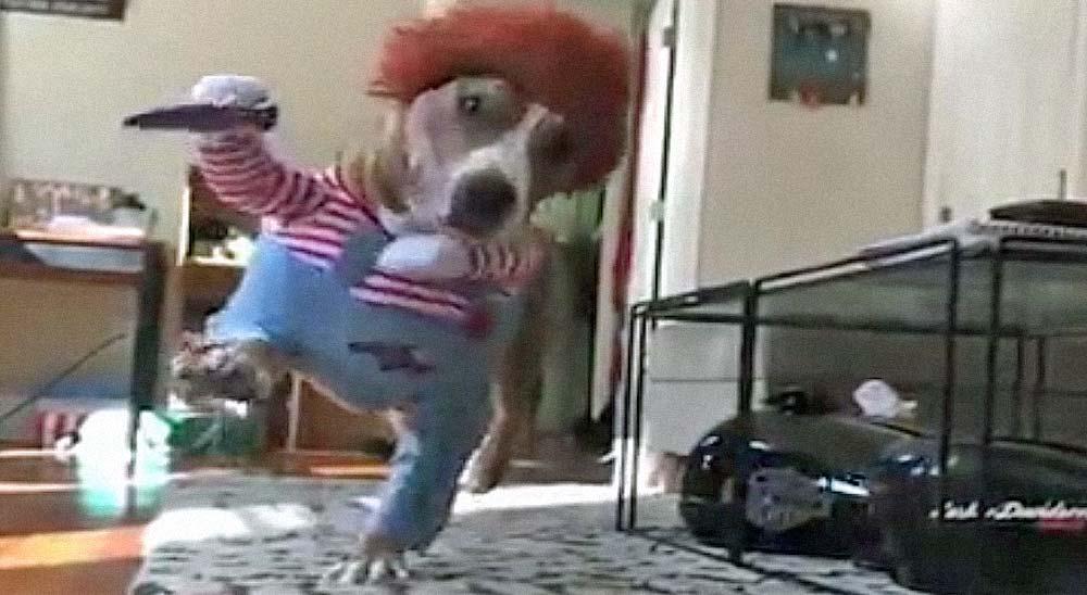 Disfraz de Chucky para perro [vídeo]