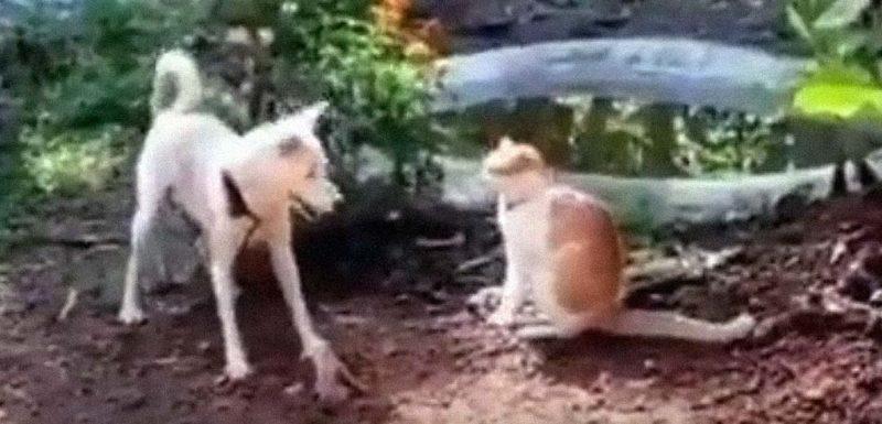 Este perro del vídeo propina una patada voladora a un gato 1