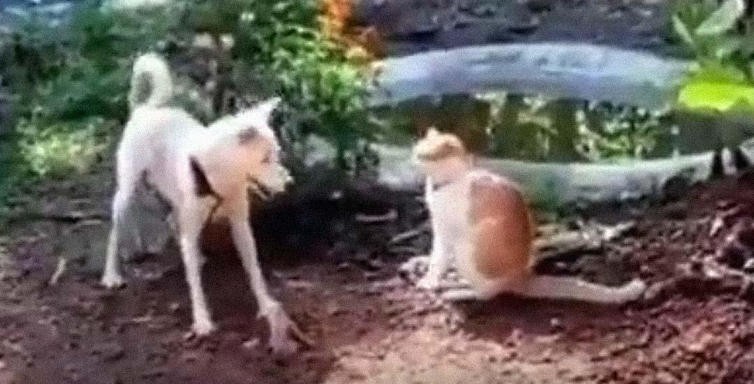 Este perro del vídeo propina una patada voladora a un gato