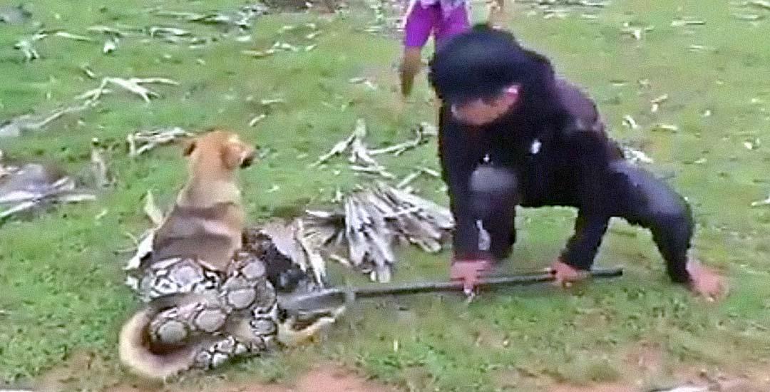 Grupo de hermanos salvan a su perro de una serpiente pitón