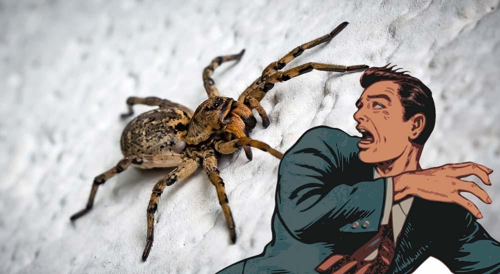 Cómo atrapar una araña en casa