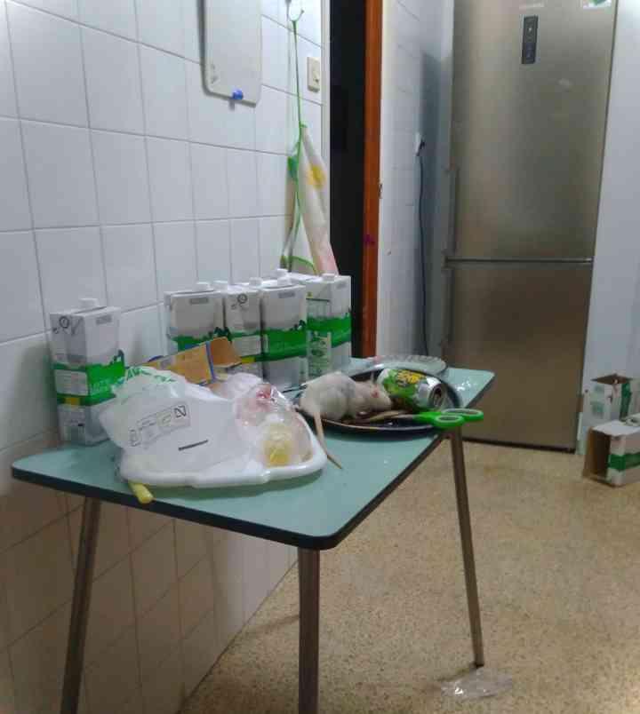 20 Extrañas cosas encontradas en las cocinas de pisos compartidos 14