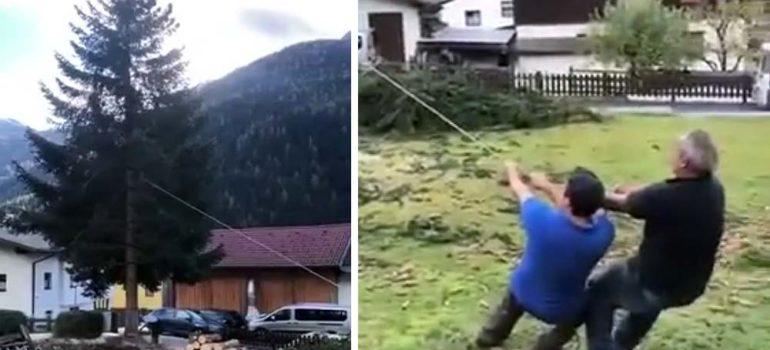 Cortando un árbol al lado de los coches, un fail perfecto 6