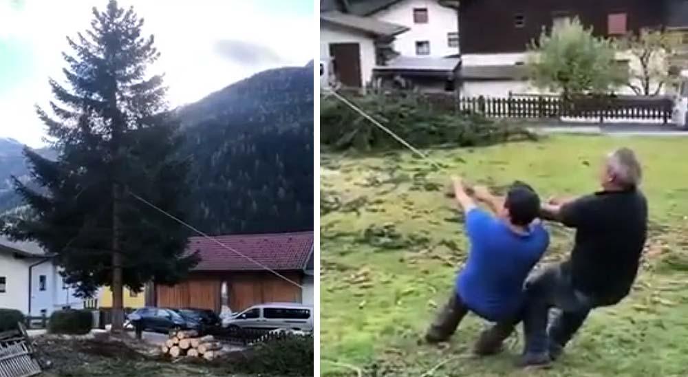Cortando un árbol al lado de los coches, un fail perfecto 10