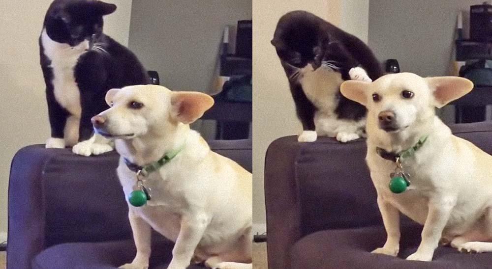 Gato evaluando si golpear o no al perro, sopesa las opciones 2