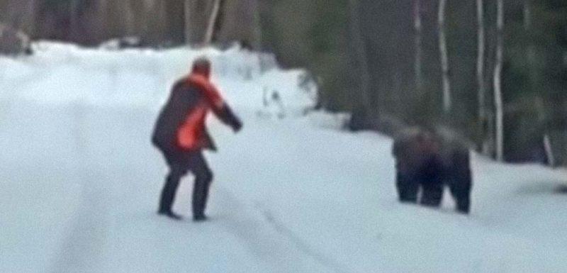Un feroz Oso pardo ataca a un hombre y este se pone a gritar para ahuyentarlo 1