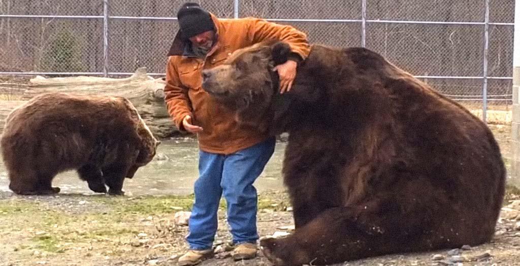 Este gigantesco Oso solo quiere que le hagan mimos