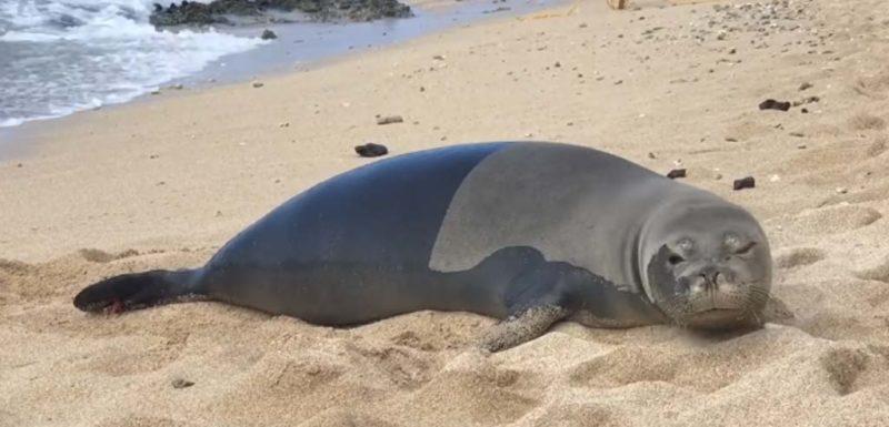 Esta foca sale del mar mira a la cámara y se tira un pedo 1