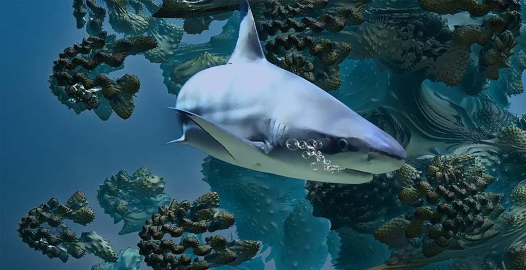 Tiburón punta negra, devora un gran banco de peces 1