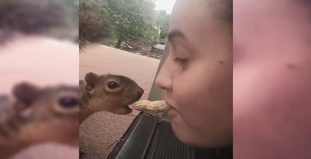 Esta ardilla come directamente de la boca de la niña 1