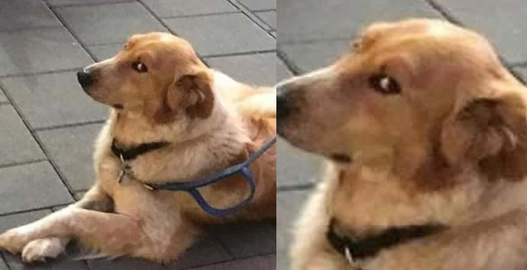 El perro vegano que no quiere comer nuggets 12