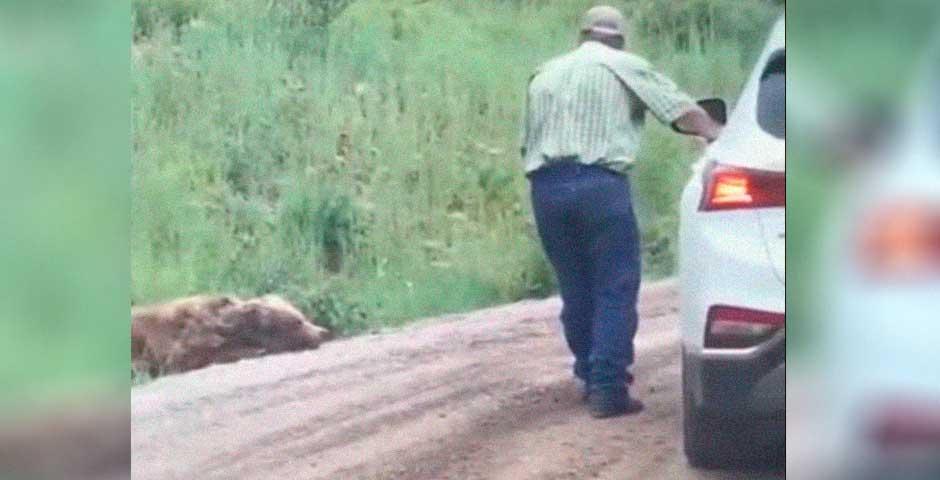 Encuentra un Oso en la carretera y ni te imaginas lo que va a ocurrir 1