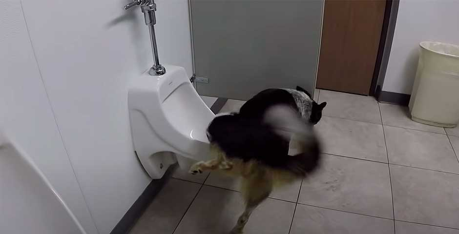 Este perro es capaz de ir al baño como una persona 4