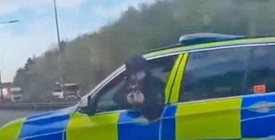 Si te para la policía de esta manera, se te ponen los hu#v0s de corbata 1