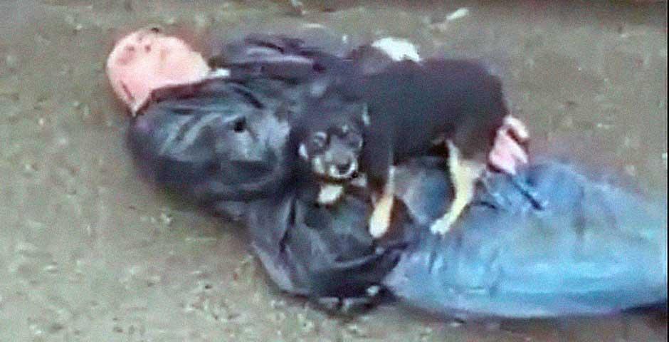 Perro defiende ferozmente a su dueño caído en el suelo 2