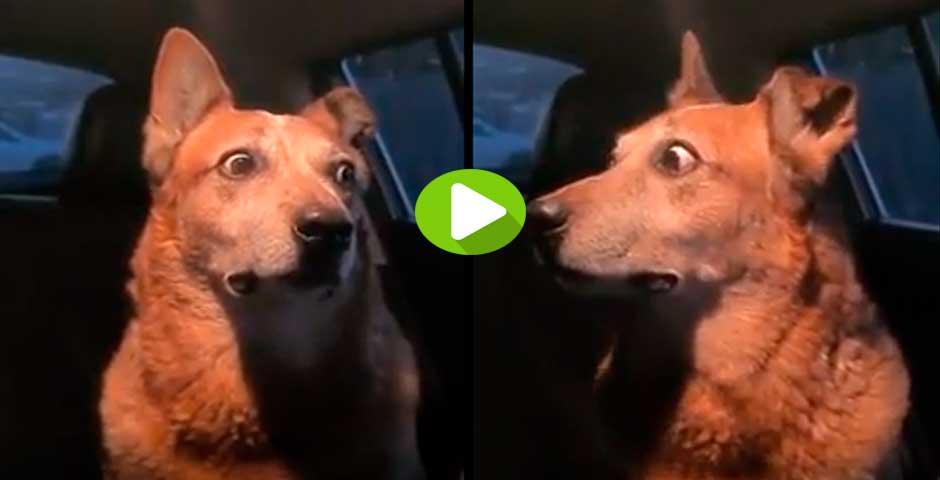 No te pierdas la cara de este perro, ¿qué es lo que pasa? 1
