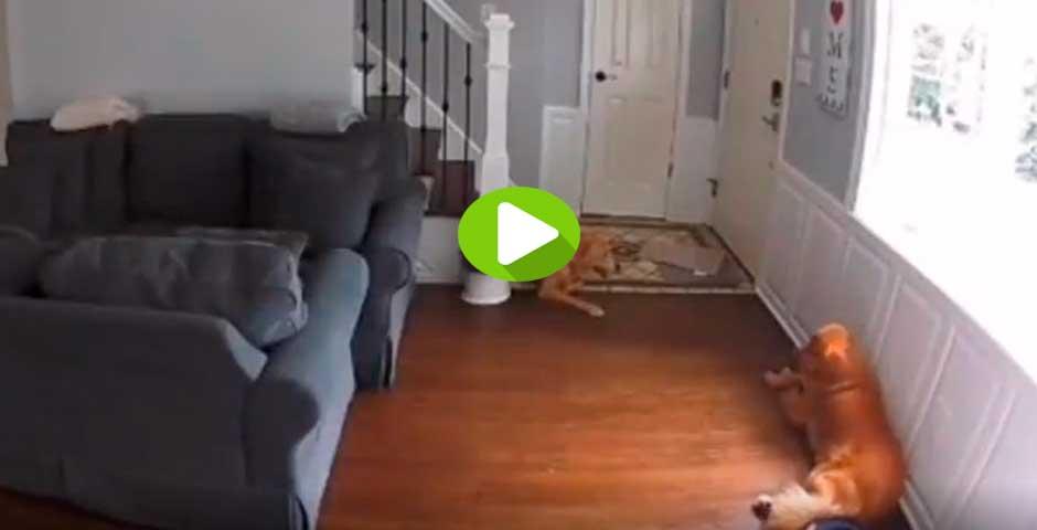 Robot aspiradora ataca al pobre perro en este vídeo 1